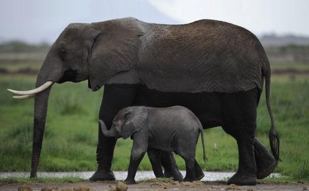 elephant poaching kruger national park