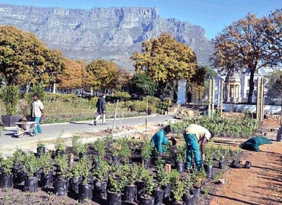 veg_garden_cape_town_relaunch
