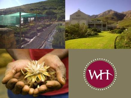 Indigenous Plant Fair Waverley Hills