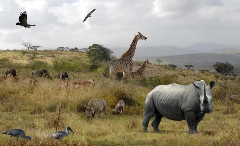 hluhluwe umfolozi panorama wildlife coal mine WESSA