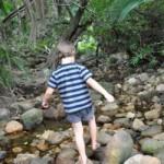Kirstenbosch stream children roundup