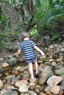 Kirstenbosch stream children roundup