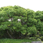 Green up communities with trees this Arbor Week