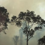 forest-sierra-leone-climate-change-ebola-deforestation