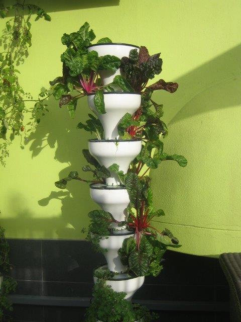 hydroponic veggie gardens