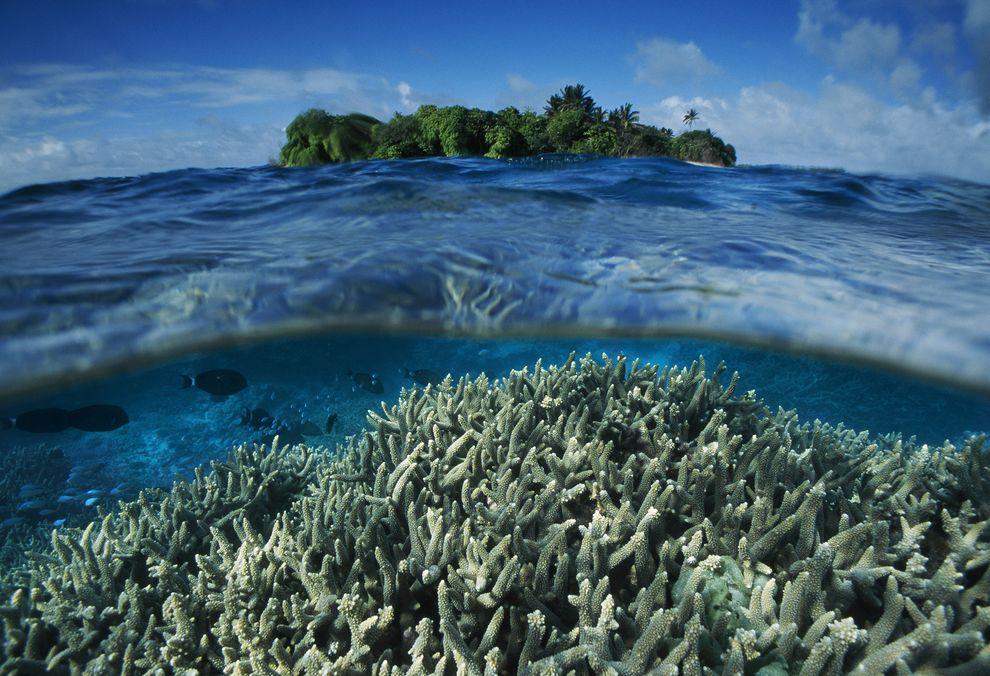 Coral reef near Palmyra Atoll