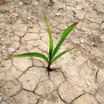 KZN farmers still desperate for rain