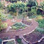food forest gardening