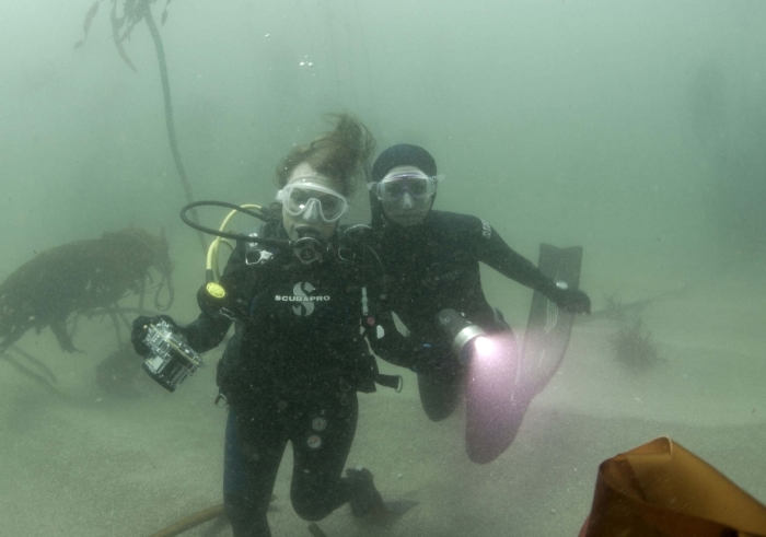 False Bay Hope Spot Dive