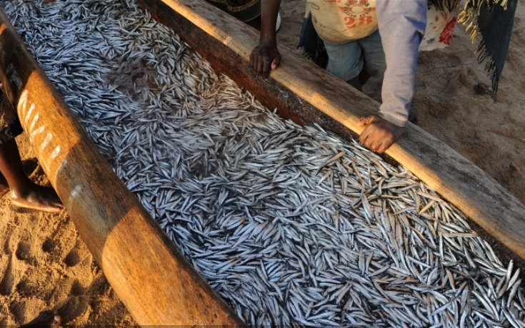 lake-malawi-dwindling-fish-stocks3