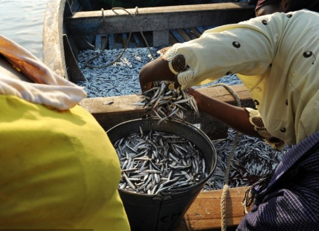 lake-malawi-dwindling-fish-stocks4