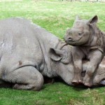 Nominations sought for rhino conservation heroes