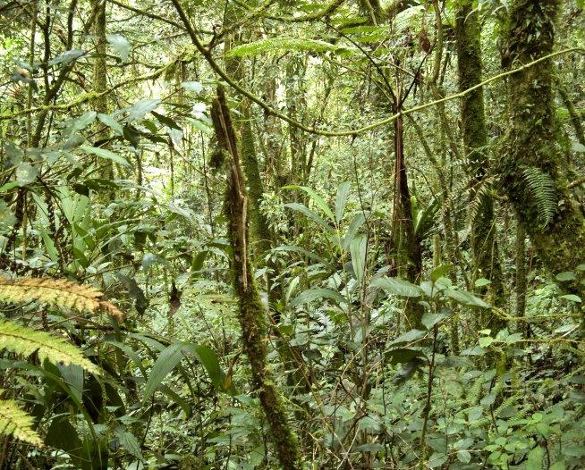 tropical forest carbon dioxide NASA