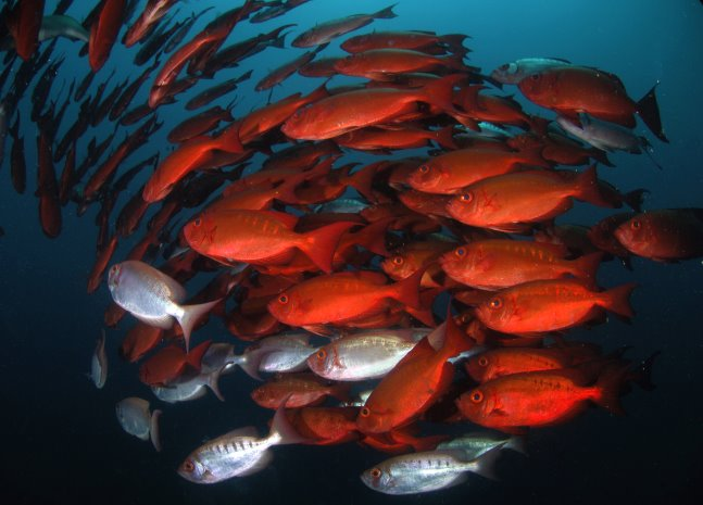 wwf marine protected fish stocks need report