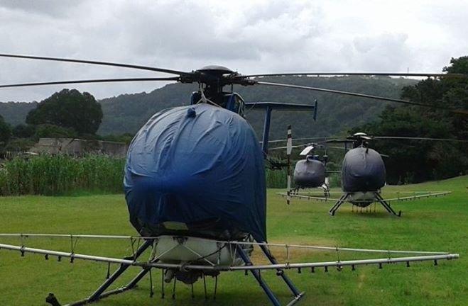 Transkei cannabis fields spraying Roundup