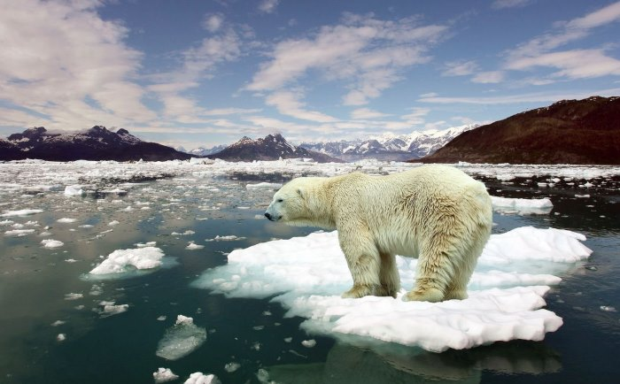 Decadal Warming Climate Change Arctic Polar Bear