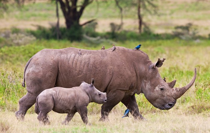 Rhino Conservation Awards