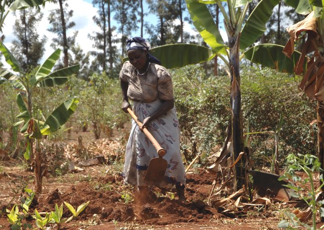 Smallholder Farmer Prepares Maize Plot for Planting