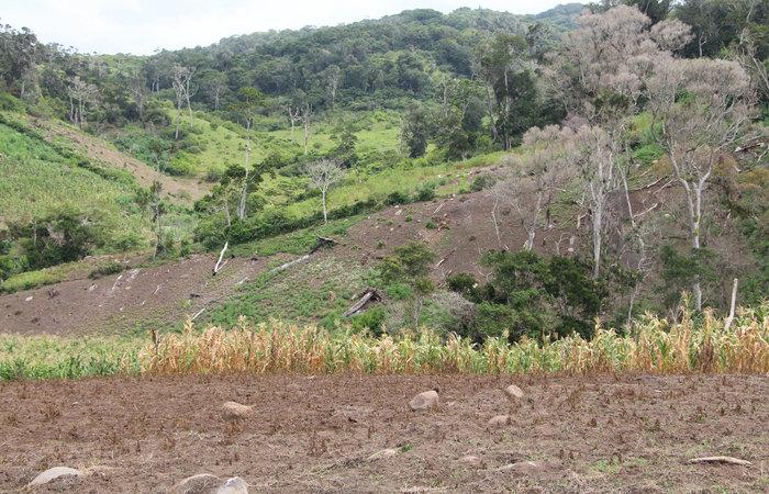 marijuana glyphosate roundup herbicide farmers