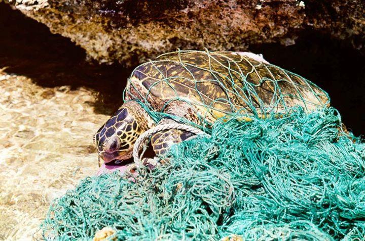 plastic ocean litter marine debris summit african6