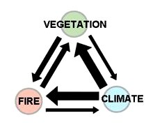 relationship between vegetation, fire and climate