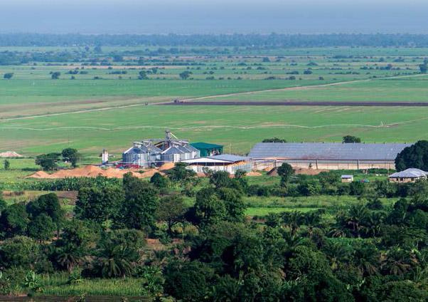 aid donors greenpeace africa tanzania farmers