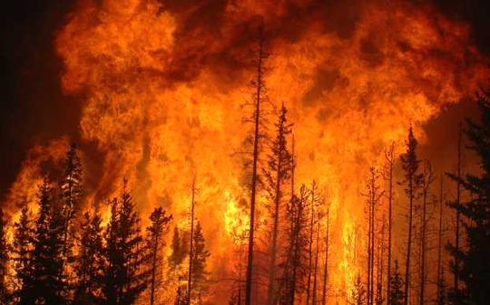 forests burn Alaska Canada wildfire