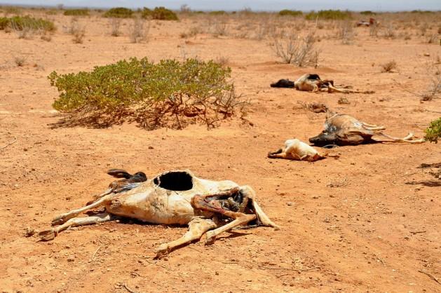 famine-bones-africa-famine-climate-adaptation-drought-un