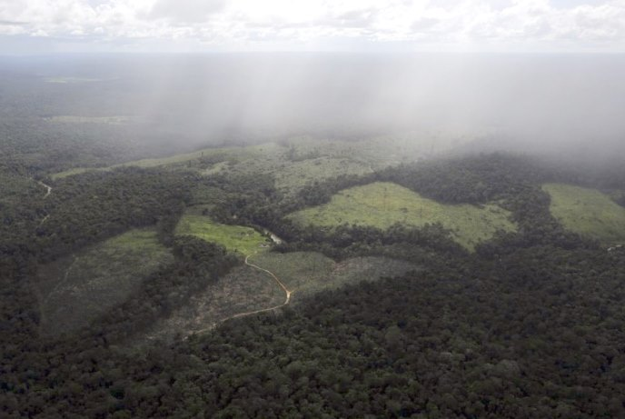 amazon rain forest deforestation cost2