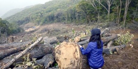 ancient forest korea threatened clearcut olympic ski