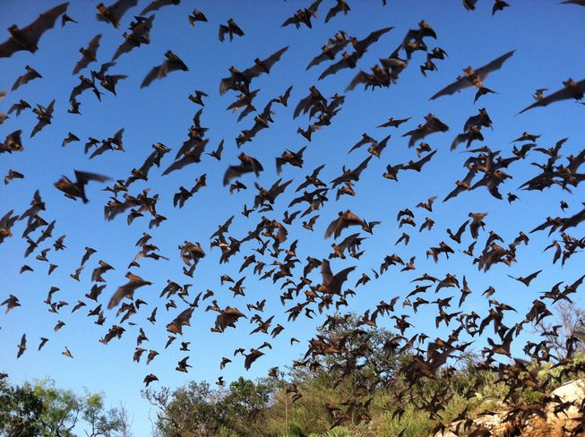 bats-texas crops protection wildlife food agriculture