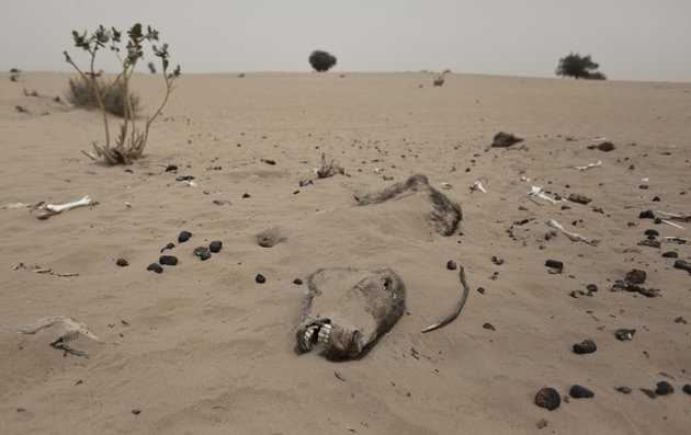 A dead donkey lies partially covered by the wind-swept sand in an area of desert where villagers take dead animals to avoid the smell and potential for disease affecting them, near the village of Dala in the Sahel belt of Chad, Friday, April 20, 2012. UNICEF estimates that 127,000 children under five in Chad's Sahel belt will require lifesaving treatment for severe acute malnutrition this year, with an estimated 1 million expected throughout the wider Sahel region of West and Central Africa in the countries of Niger, Nigeria, Mali, Chad, Burkina Faso, Cameroon, Senegal and Mauritania. The organization says the current food and nutrition crisis stems from scarce rainfalls in 2011, which caused poor harvests and livestock production, though the situation in Chad has also been exacerbated by an influx of Chadians returning from Libya as a result of the conflict there. (AP Photo/Ben Curtis)