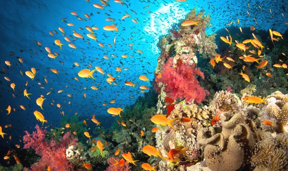report claims coral reefs die human activity