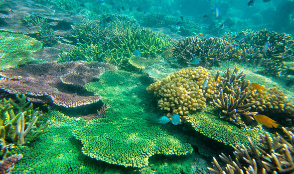report claims coral reefs die human activity2