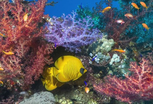 report claims coral reefs die human activity3b