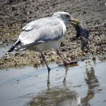 99% of all seabirds will have ingested plastic by 2050