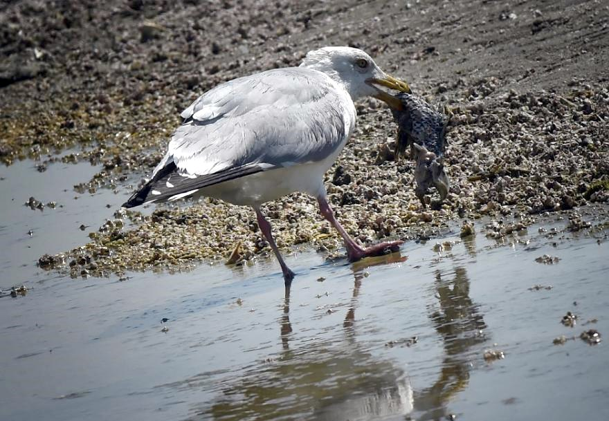 seabirds plastic stomach waste ocean protect research