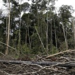 World's forests face a decisive year according to UN report