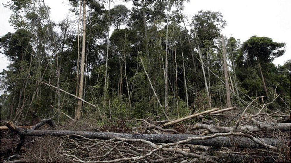 world tree cover deforestation un report