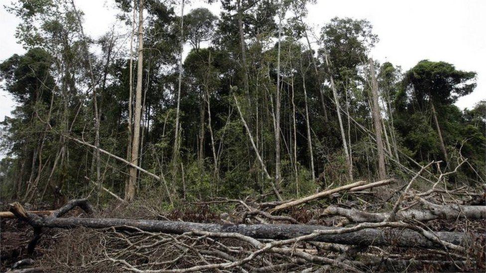 world tree cover deforestation un report