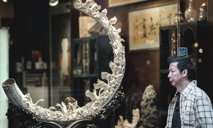 Chinese ivory queen charged with smuggling 706 elephant tusks