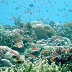 How we are all contributing to the destruction of coral reefs: Sunscreen