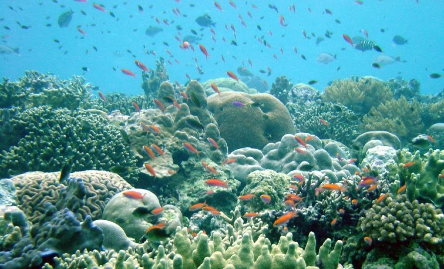coral reef marine protected sunscreen ocean