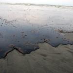 BP oil spill killed several trillion larval fish