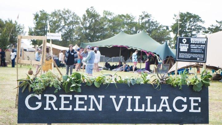 rocking daisies 2015 green village mark reitz