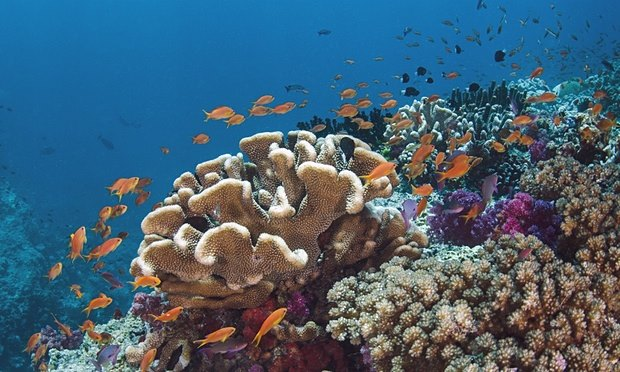 threatened-coral-reef-climate-change-emissions