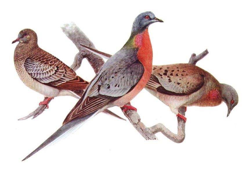 Ecomodernist Manifesto birds