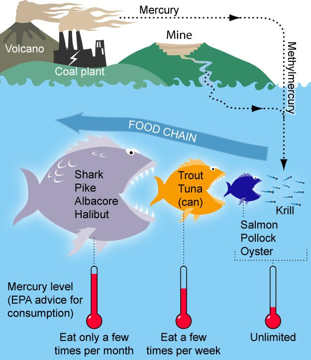 Mercury levels rising in Pacific yellowfin tuna, study says3