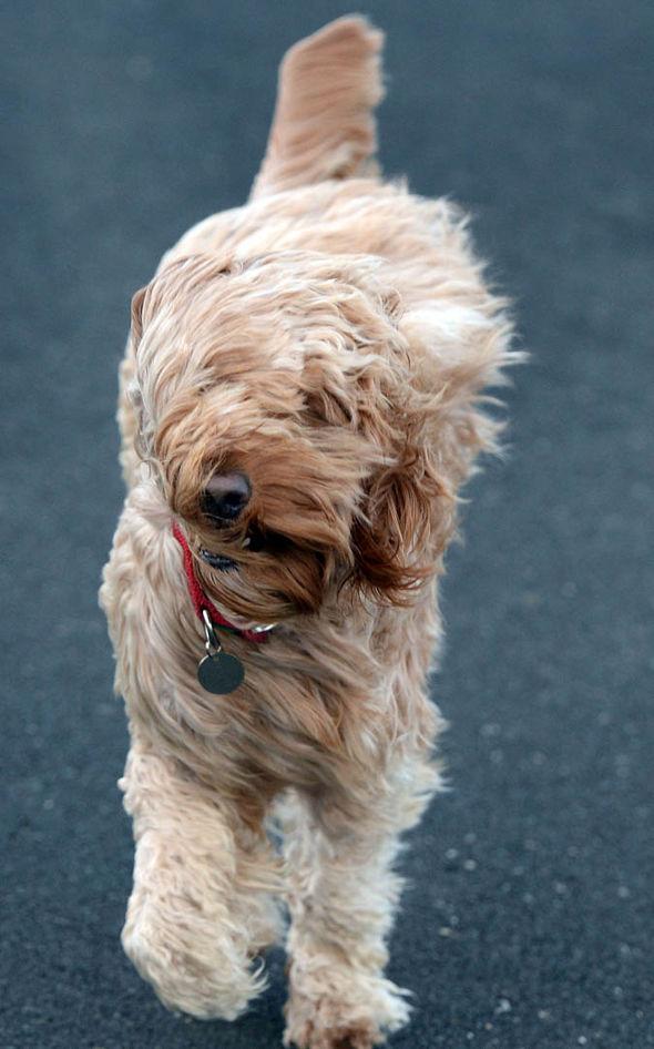 dog united kingdom christmas summer storms extreme weather