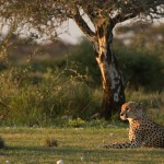 Botswana sells fracking rights in national park